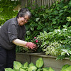 Debbie Currian prepares her garden for her 36th season at Chautauqua on Wednesday, June 12, 2019. SARAH YENESEL/STAFF PHOTOGRAPHER