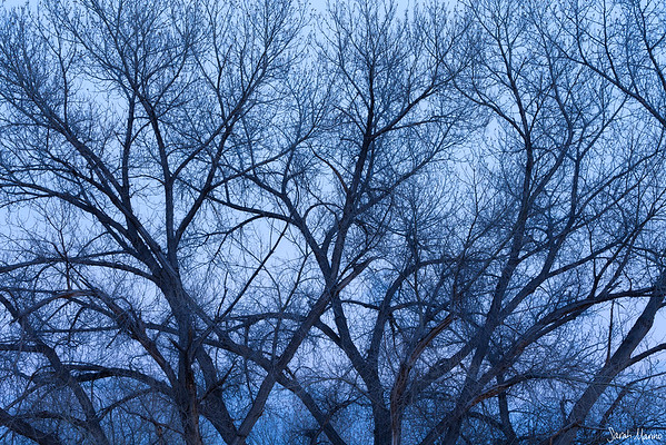 Winter's Limbs
