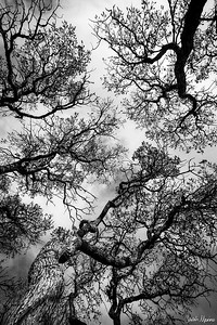 Sinuous Branches