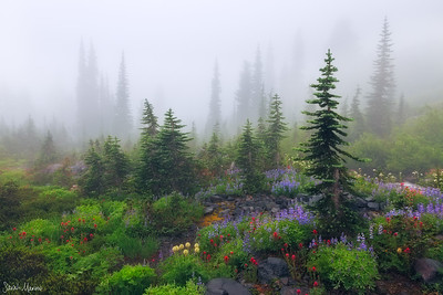 Misty Meadows