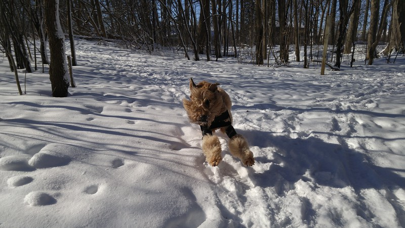 First time off-leash since August 24 2016 due to medial shoulder instability.