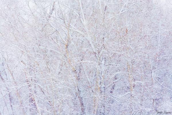 Quiet Winter