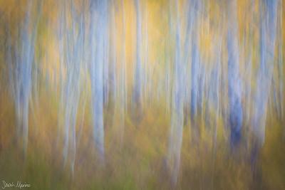 Tree Impressions