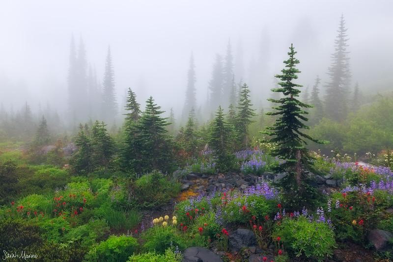 Misty Meadows