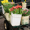 A wagon of tulips just outside the market walls.  Ah, it's Spring at the Market!