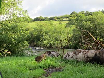 Dartmoor June 2012