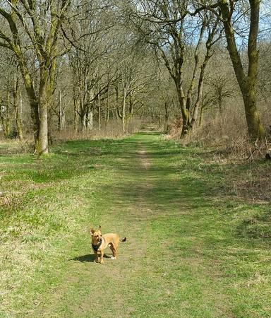 Savernake Forest April '15