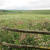 An Aldworth meadow. Taken 13th June 2012.