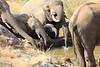 Sarara_Elephants_Waterhole_Kenya0007
