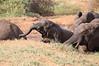 Sarara_Elephants_Waterhole_Kenya0027