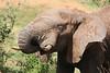 Sarara_Elephants_Waterhole_Kenya0001