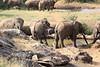 Sarara_Elephants_Waterhole_Kenya0009