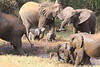 Sarara_Elephants_Waterhole_Kenya0011