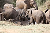 Sarara_Elephants_Waterhole_Kenya0019