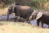 Sarara_Elephants_Waterhole_Kenya0024