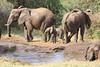Sarara_Elephants_Waterhole_Kenya0030