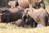 Sarara_Elephants_Waterhole_Kenya0020