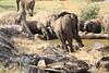 Sarara_Elephants_Waterhole_Kenya0005