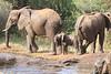 Sarara_Elephants_Waterhole_Kenya0028