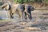 Sarara_Elephants_Samburu_Singing-Wells_Kenya0006