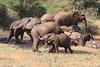 Sarara_Elephants_Waterhole_Kenya0022