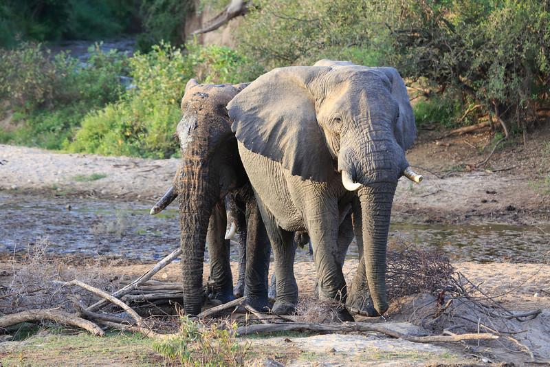 Sarara_Elephants_Samburu_Singing-Wells_Kenya0001