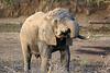 Sarara_Elephants_Samburu_Singing-Wells_Kenya0007