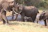 Sarara_Elephants_Waterhole_Kenya0026