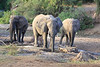Sarara_Elephants_Samburu_Singing-Wells_Kenya0002