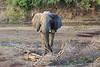Sarara_Elephants_Samburu_Singing-Wells_Kenya0004