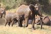 Sarara_Elephants_Waterhole_Kenya0018