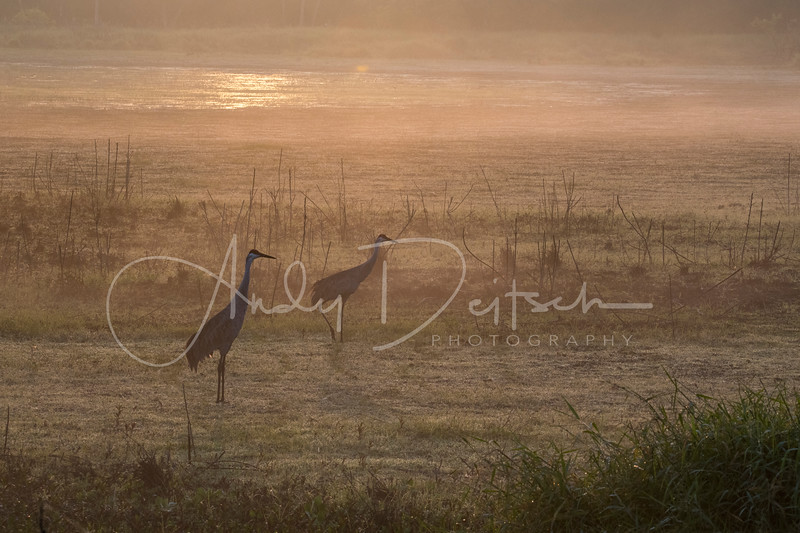 Morning in Myakka River State Park