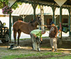Saratoga 8-16©DonnaLovelyPhotos com-8545