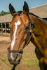 Saratoga 8-16©DonnaLovelyPhotos com-8915