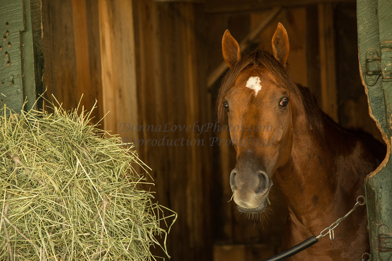 Chestnut in Stall_8980