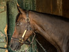 Legally Bay,Coffeepot Stables, Saratoga Race Track_8824©DonnaLovelyPhotos com--2