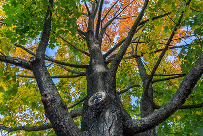 Looking through the colorful canopy of leaves