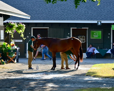 Fasig-Tipton  Auction