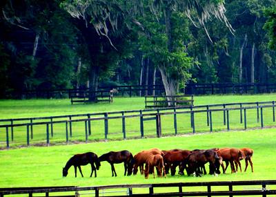 Ocala (FL) Horse Farm