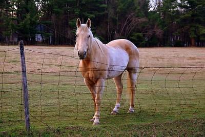 horse saratoga winery