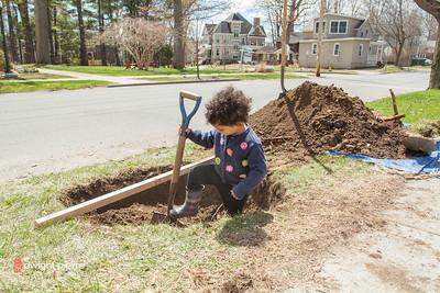 saratoga springs treee planting IMG_5314