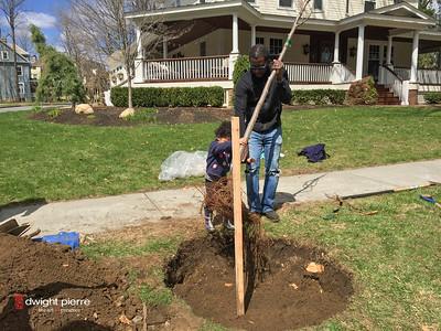saratoga springs treee planting IMG_9104