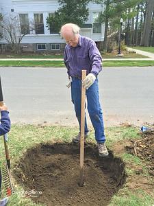 saratoga springs treee planting IMG_9086