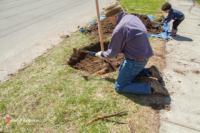 saratoga springs treee planting IMG_5298