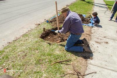saratoga springs treee planting IMG_5301