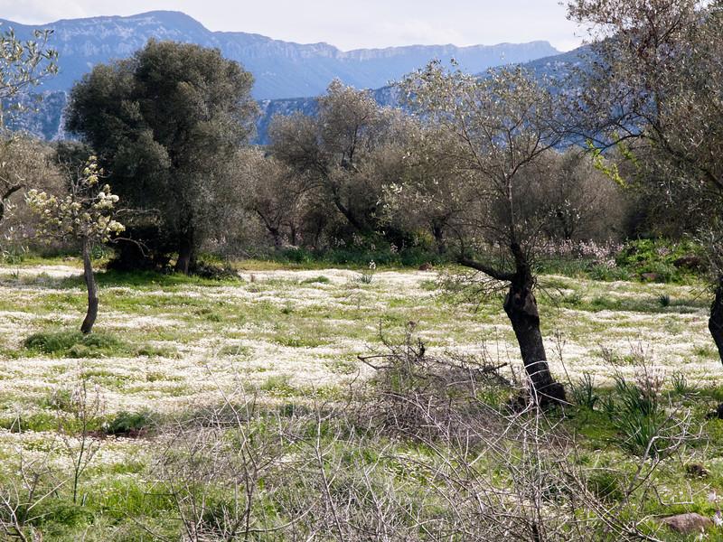 spring meadow near Serra Orios bronze age settlement, Sardegna<br /> <br /> Olympus E-600 & Zuiko 12-60mm/2.8-4.0