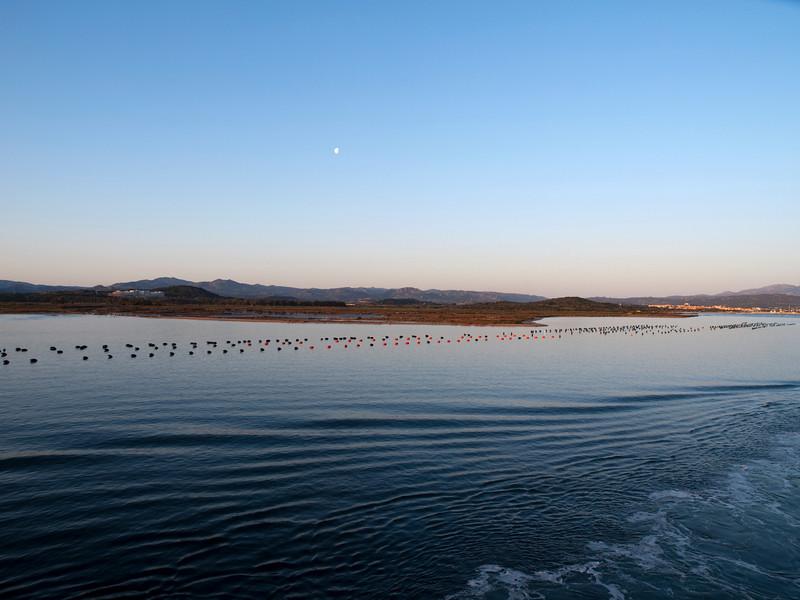 Mussel culture, Gulf of Olbia, Sardinia<br /> Olympus E-420 & Zuiko 12-60mm/2.8-4.0