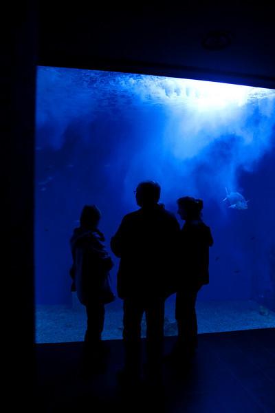 Mediterranean sea water aquarium of Cala Gonone<br /> <br /> Olympus E-600 & Zuiko 12-60mm/2.8-4.0