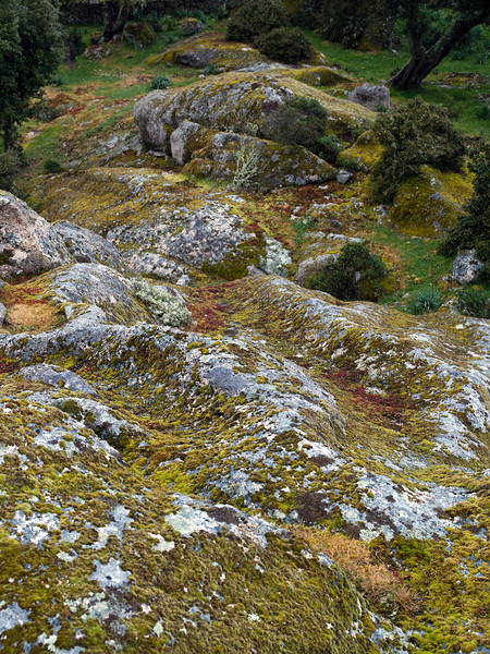 moss and lichens on granite near Nuraghe Loelle, near Buddusò, east-central Sardinia<br /> Olympus E-420 & Zuiko 12-60mm/2.8-4.0
