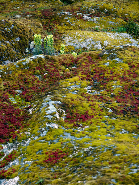 overgrown granite near Nuraghe Loelle, near Buddusò, east-central Sardinia<br /> Olympus E-420 & Zuiko 12-60mm/2.8-4.0